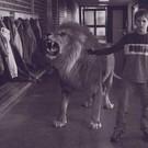 Sterk als een leeuw 2003 - Tafel leeuw ...